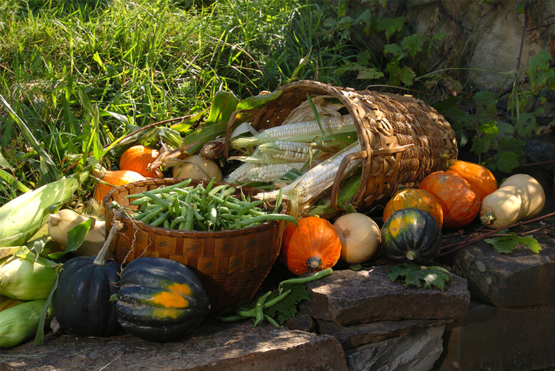 oneida-indian-nation-beliefs-traditions-companion-planting