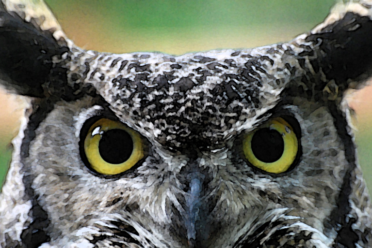 The Legend of Why The Owl Has Big Eyes