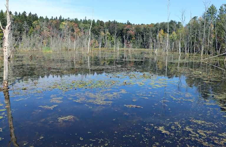 Nichols Pond remains little-known site of ancient Oneida village